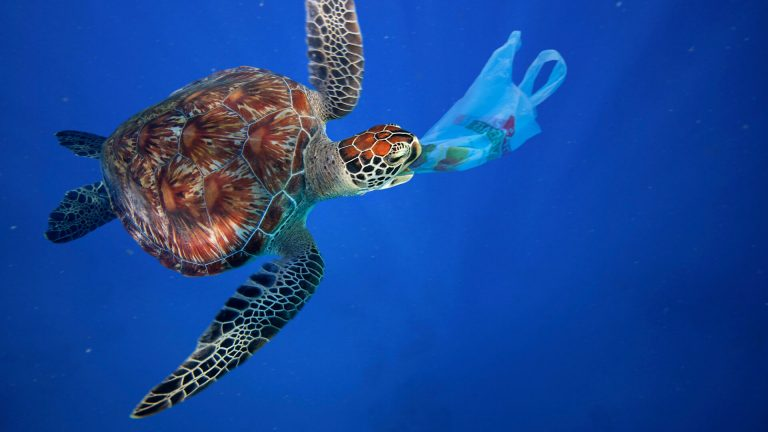Why we joined the fight against plastics